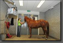 Behandelruimtes paardenpraktijk röntgenruimte