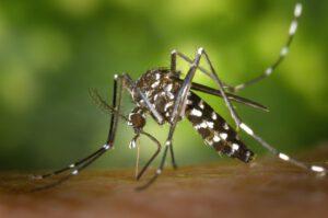 Lees meer over het artikel Het West-Nijl Virus